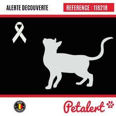 Cette Alerte est désormais close : elle n'est donc plus visible sur la plate-forme www.petalert.be. Le propriétaire de l'animal l'a reconnu, c'est Cookie, disparu du quartier des 4 Sapins. Merci pour votre aide.