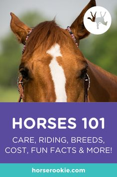 If you want to learn all you can about horses, this is the perfect starter guide for you! Learn about horse history and biology, how to care for them, and the basics of riding in this beginners' guide to all things horses. Western Horse Riding, Horse Riding Tips, Western Saddles, All About Horses, Facts About Horses, Horse Training, Training Tips, Different Horse Breeds, Cutting Horses