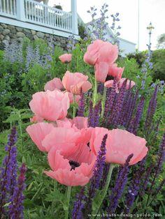 Parterre Garden Services Cambridge/Cape Cod, MA FL   G A R D E N    Pinterest   Gardens And So