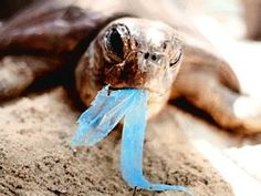Save the earth - use less plastic and stop the pollution!