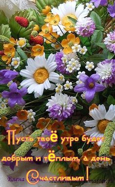 Good Morning, Plants, Live, Buen Dia, Bonjour, Plant, Good Morning Wishes, Planets