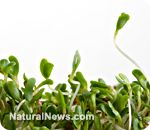 USDA approves Monsanto alfalfa despite presence of infertility-causing pathogens (What are they thinking????)