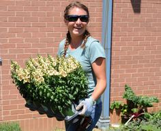 Celebrity landscaper helps build an educational garden at Glassboro elementary school, May 2015 Strawberry Plants, Elementary Schools, Photo Galleries, Celebrity, Education, Landscape, Gallery, Garden, Scenery
