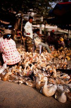 Takeo Market . Cambodia