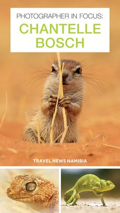The Windhoeker Chantelle Bosch goes to the coast, capturing what she considers the unappreciated wonders of Namibia's micro universe. Travel News, Travel Guide, Unappreciated, Coast, Universe, Photography, Photograph, Travel Guide Books, Fotografie