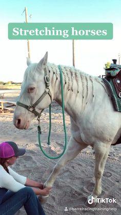 Horseback Riding Tips, Horse Riding Tips, Horse Tips, Trick Riding, Barrel Racing Exercises, Horse Exercises, Stretching Exercises, Baby Horses, Cute Horses