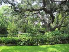 charleston shad landscape.  Love these wonderful large southern live oak trees.  Some down lighting here would look fantastic at night. www.night-scenes.com