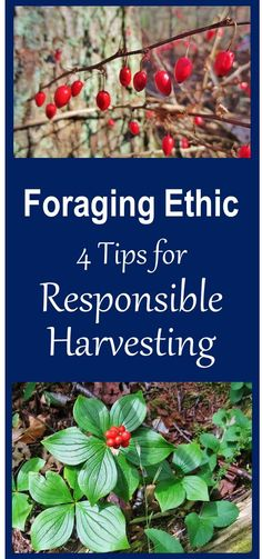 Foraging Ethic encourages responsible behavior that reduces the forager's impact on nature. Also explains why this is so important.