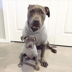 #twinning @bluebrill by pitbullsofinstagram