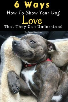"""6 Ways How To Show Your Dog Love That They Can Understand - """" Informations About 6 Ways How To Show Your Dog Love That They Can Understand Pin You can easil - Cat Dog, Dog Paws, I Love Dogs, Puppy Love, Pet Care Tips, Pet Tips, Dog Boarding, Dog Behavior, Training Your Dog"""