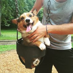 Corgi's first swing.
