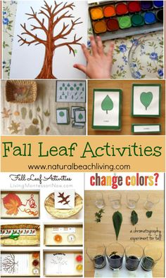 AWESOME Fall Leaf Activities for Kids, Crafts, Science, Art, Fine Motor Skills with free printables, Montessori Activities, Nature... LOVE IT ALL! Autumn Activities For Kids, Fall Preschool, Preschool Crafts, Kids Crafts, Montessori Activities, Preschool Activities, Montessori Education, Tree Study, Autumn Crafts