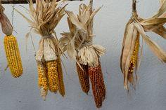 rock corn