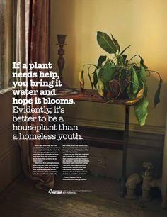 Raise The Roof Plant advertisement
