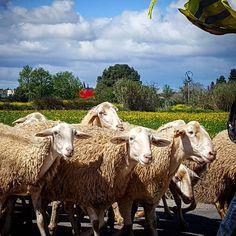 El silencio de los corderos. #diariodeuninstagramer