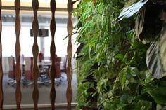 Detalle de nuestros trabajos de jardines verticales y paisajismo realizado en Madrid. Más información en este enlace: http://www.alicanteforestal.es/jardines-verticales-paisajismo-madrid/