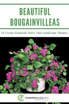 Beautiful Bougainvilleas to Create Fantastic Fairy Tale Landscape Themes Real Plants, Faux Plants, Live Plants, Artificial Indoor Plants, Bougainvillea Tree, Creepers, Botany, Beautiful Flowers, Fairy Tales