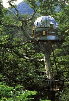 Treehouse - very cool. Would love to spend a night in this tree house. Benidorm, Spain, España Treehouse - very cool. Would love to spend a night in this tree house. Future House, My House, Cool Tree Houses, Amazing Houses, Amazing Tree House, Unusual Homes, Tiny House Movement, In The Tree, Play Houses