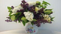 Deko Tipps wie man Flieder für die Vase schneiden und für langlebigkeit sorgt. von Deko Ideen mit Flora-Shop