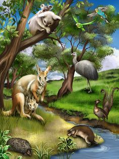 Diamond Painting Kangaroo and Koala Stream Kit. Over Diamond Art designs to choose from. High-quality canvas and diamond drills. Graffiti Kunst, Animals And Pets, Cute Animals, Tropical Art, Australian Animals, Animal Sketches, Animal Wallpaper, Fantasy Landscape, Wildlife Art