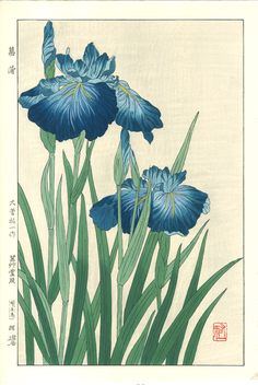Iris by Yuichi Osuga from Shodo Kawarazaki Spring Flower Japanese Woodblock Prints Art And Illustration, Iris Painting, Art Japonais, Japanese Flowers, Japanese Paper, Guache, Japanese Painting, Chinese Painting, Japanese Prints