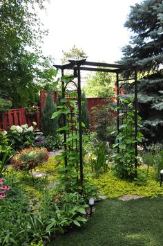 In my last post, we finished off at the entrance to the one sunny pocket in the backyard garden.      Let's head under the arbor and lo...