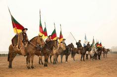 cavalos, horse, campeiro, gaúcho, rio grande do sul,