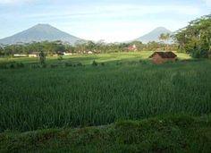 Gunung Sumbing dan Gunung Sindoro, dilihat dari Temanggung Mountains, Nature, Travel, Naturaleza, Viajes, Trips, Nature Illustration, Outdoors, Traveling