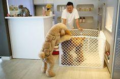 Tosas divertidas e criativas de uma petshop em Taiwan.