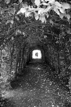 vine-grown archway. I will use bitter-sweet for mine