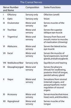 Image result for cranial nerves 1-12