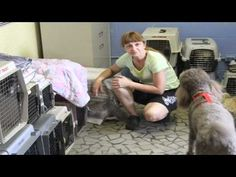 A Day At Carolina Poodle Rescue