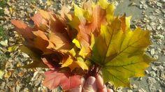 Autumn colors Autumn, Colors, Plants, Fall, Colour, Flora, Plant, Planting