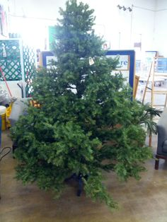 Christmas Trees – Starting at $10 – Only a few more remaining!
