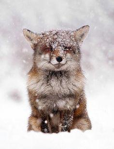 fotos invernales