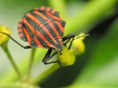 The ever new collection of insect hd desktop pictures