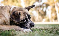 Grape Street Park, San Diego dog photography :: dogscapes.com