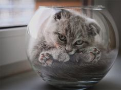 Photos That Prove Cats Are Liquid
