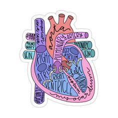 Decorate laptops, Hydro Flasks, cars and more with removable kiss-cut, vinyl decal stickers. Glossy, matte, and transparent options in various sizes. Super durable and water-resistant. Labeled/hand-lettered anatomical heart