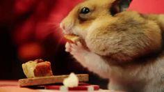 New trending GIF on Giphy. thanksgiving hamster tiny thanksgiving. Follow Me CooliPhone6Case on Twitter Facebook Google Instagram LinkedIn Blogger Tumblr Youtube