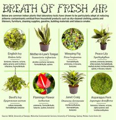 Superhero Scrubs the Air: The Mighty Houseplant Breath of Fresh Air - Plants that reduce airborne contaminants!Breath of Fresh Air - Plants that reduce airborne contaminants! Permaculture, Air Plants, Indoor Plants, House Plants Air Purifying, Green Plants, Tropical Plants, Plantas Indoor, Detox Your Home, Mother In Law Tongue