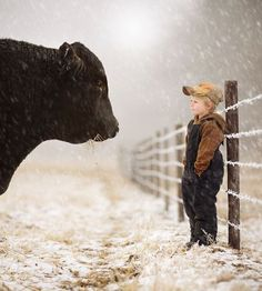 Cool picture, however, now if the bull head butts the child its over. Very dangerous to trust a cow this close to a toddler. Cows are dumb and curious. They also kill many farmers each year including experienced ones.