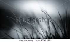 Reed and grass with smooth background in black and white - stock photo
