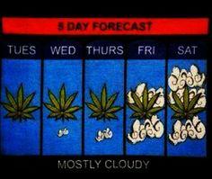 weed forecast