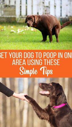 Outdoor Dog Area, Backyard Dog Area, Outdoor Dog Runs, Dog Training Techniques, Dog Training Tips, Potty Training, Kennel Training A Dog, Dog Playground, Outside Dogs
