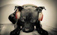 Let me introduce you: DJ Lab. The world's best #Labrador DJ!