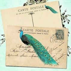 Peacock postcard art - reminds me of Sabine & Griffin books.