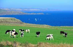 Waibury New Zealand Farm Investments Blog June 2014