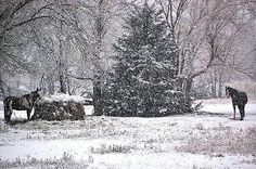 Street Horses in snow in Winfield Horses In Snow, Farm Pictures, Old Farm, Street, Landscapes, Inspiration, Painting, Outdoor, Art