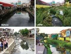 Bio-remediation:  These images are of the healing of polluted waterways with floating gardens in Manila, Philippines.  Envision a world in which the waters run clear and the aquatic ecosystems are diverse and healthy.  A project by http://www.biomatrixwater.com/ Video: http://vimeo.com/29597724   Related: Natures 100 best solutions: http://www.filmsforaction.org/watch/janine_benyus_natures_100_best/  http://www.occupylove.org